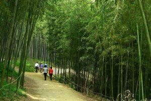 Vườn trúc Juknokwon là một điểm đến thú vị cho những ai đặt chân khám phá xứ sở Kim Chi
