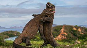 Công viên quốc gia Komodo nơi bảo tồn nhiều động vật quý hiếm