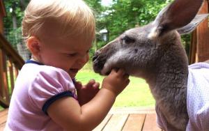 Công viên hoang dã Caversham được nhiều em bé thích thú