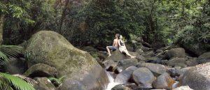 Daintree được biết đến là khu rừng mưa lâu đời nhất hành tinh với tuổi thọ 135 triệu năm