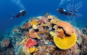 Rạn san hô Great Barrier đã được xếp hạng vào danh sách Di sản thế giới.