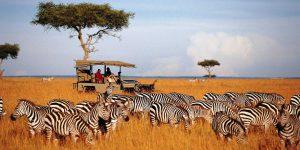 Khu bảo tồn Masai Mara ngoài nhiều động vật hoàn dã còn là nơi sinh sống của nhiều bộ tộc với lối sống hòa mình vào thiên nhiên