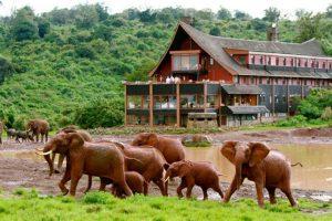Những chú voi đáng yêu ở vườn quốc gia Aberdares