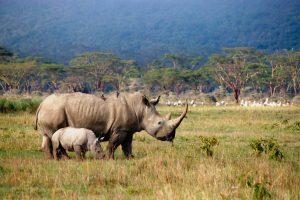 Công viên Quốc gia Aberdares với nhiều động vật hoang dã